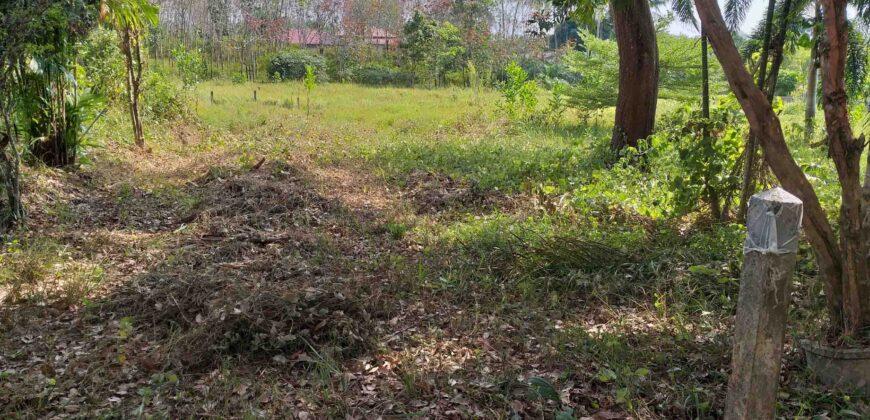 ฺBeautiful land for sale in Khaolak