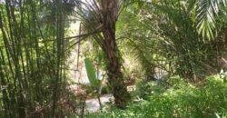 Land near waterfall for sale in Khaolak