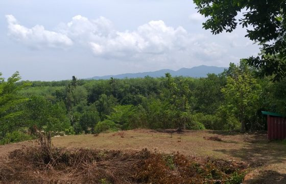 For sale 2 plots of 1600 Sqm, Located on 20 minutes to Khao Lak