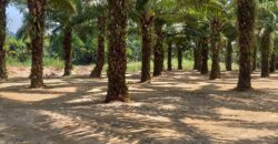 Land for sale in Khao Lak