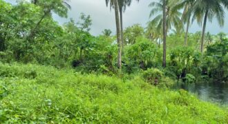 Located 1 Km from the beaches, nice land for sale