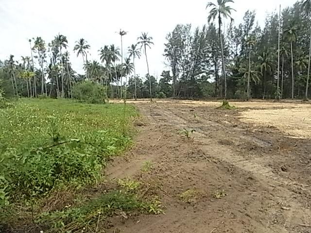 Terrain À Vendre À Bangsak, À 15mn De Khao Lak Et 5mn Des Plages