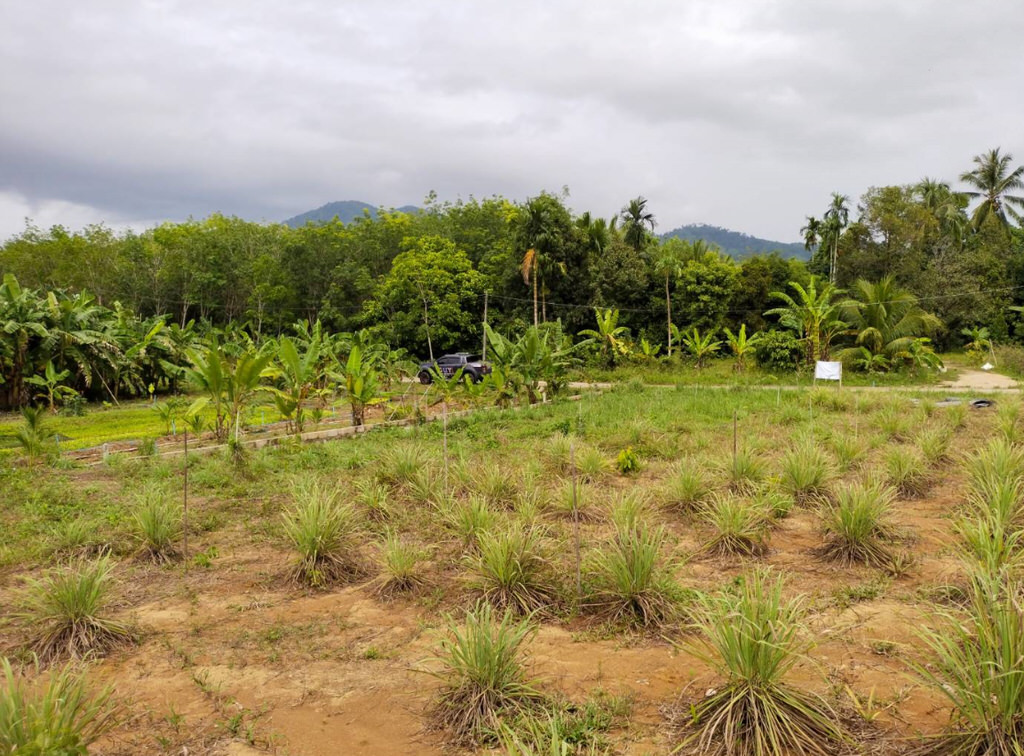 Land for sale in Lam Kan