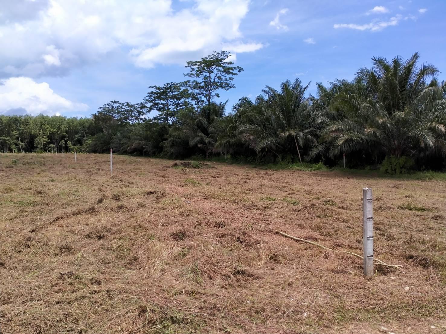 Beau terrain à vendre, valeur d'investissement. 5 minutes à pied des plages de Khaolak.